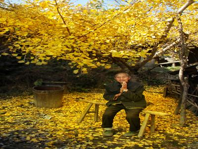 落叶纷飞知秋来